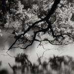 See_web_copyright_by_Friedrich Saller