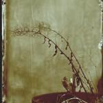 Topfpflanze__WP_2011__fotografiert_von_Friedrich_Saller